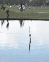 Excalibur arising from Long Pond, Clapham Common